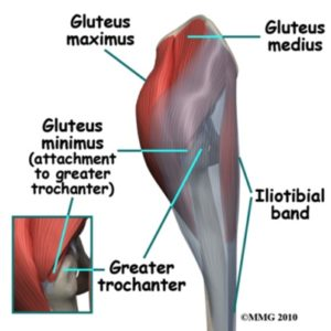 Knee Pain- picture of gluteal muscles and iliotibial band