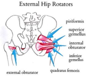 Knee Pain- picture of hip external rotator muscles
